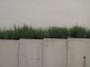 Pflanzen-Verschiedene-Foto_Textur_B_0058