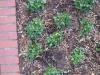 Pflanzen-Verschiedene-Foto_Textur_B_08720