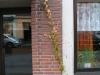 Pflanzen-Verschiedene-Foto_Textur_B_10100