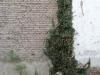 Pflanzen-Verschiedene-Foto_Textur_B_10150