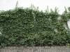 Pflanzen-Verschiedene-Foto_Textur_B_15140