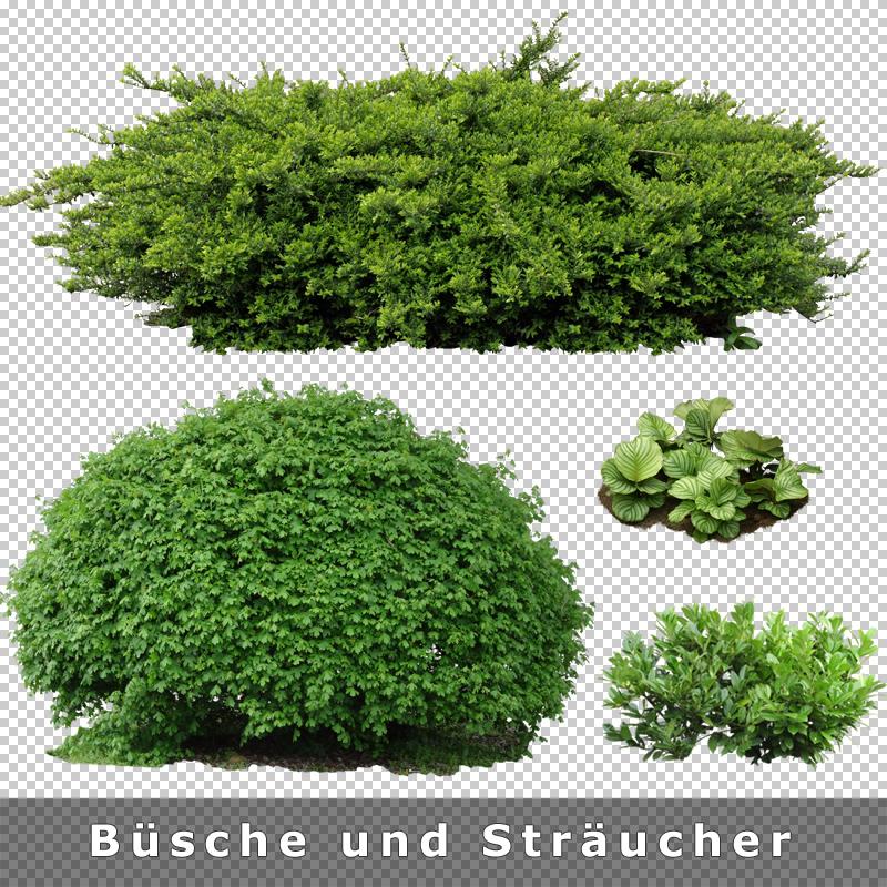 cutout plants v01 freigestellte pflanzen zur architektur visualisierung. Black Bedroom Furniture Sets. Home Design Ideas