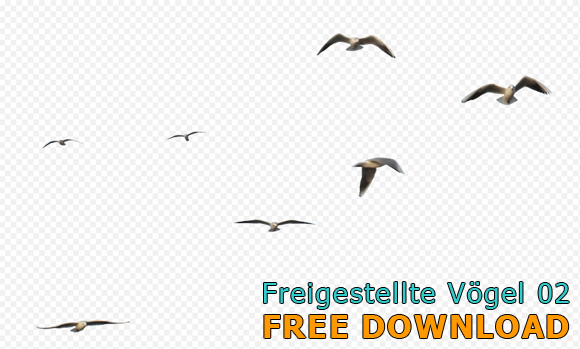 Freigestellte-Voegel-Free-Download_580