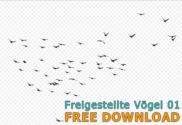Freigestellter-Vogelscharm-Kostenloser-Download_580
