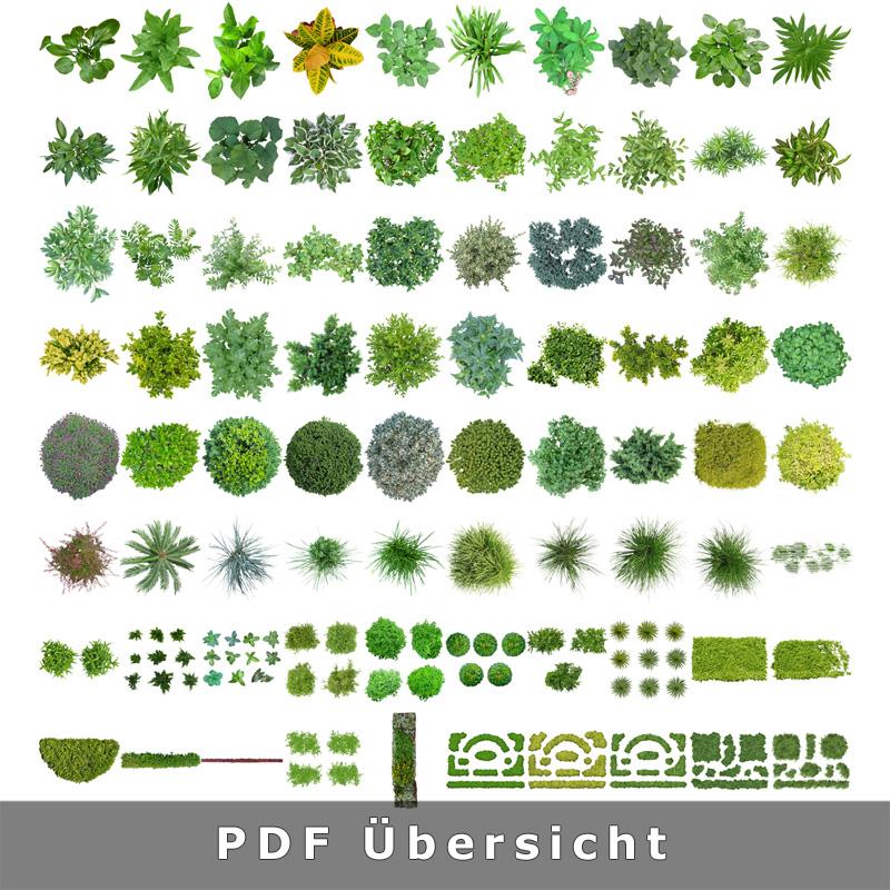 2-bibliothek-freigestellte-pflanzen-grafiken-architektur-visualisierung