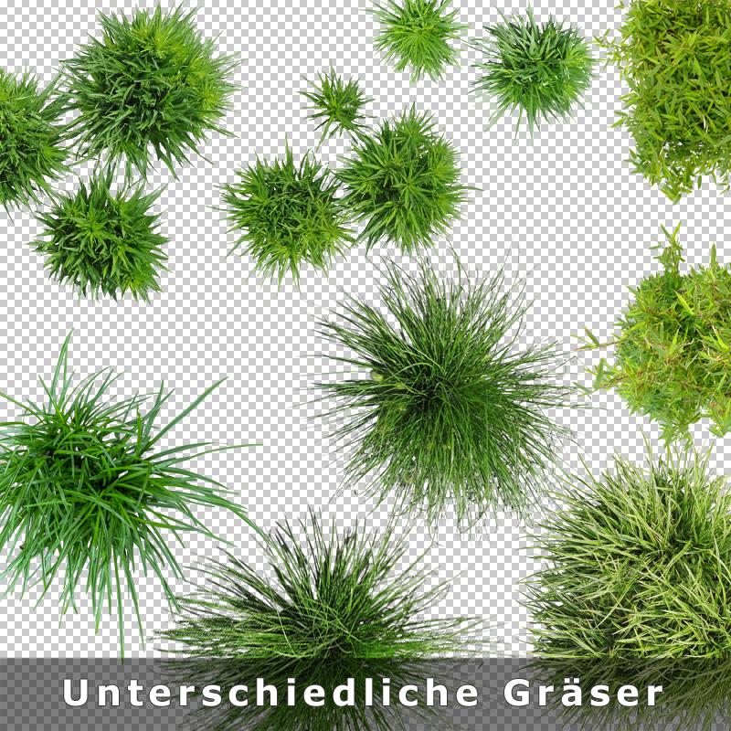 5-freigestellte-graeser-draufsicht-png-download