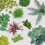 150-Unterschiedliche-Pflanzen-Typen-Sammlung-Bibliothek