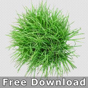 Pflanze-Bambus-Freigestellt-Draufsicht-Free-Kostenlos-Download