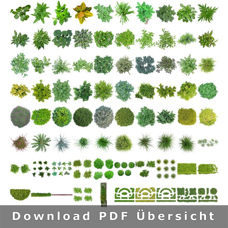 top view plants v2 freigestellte pflanzen 2d grundriss. Black Bedroom Furniture Sets. Home Design Ideas