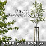 BoulevardTreesV01_FreeExample7c