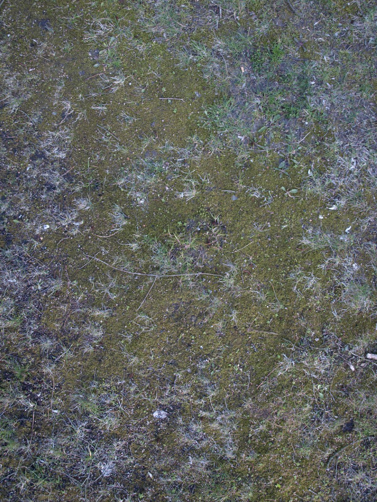 Boden-Erde-Steine_Textur_A_P4120949