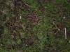 Boden-Erde-Steine_Textur_A_P1179335