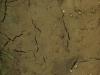 Boden-Erde-Steine_Textur_A_P4101910