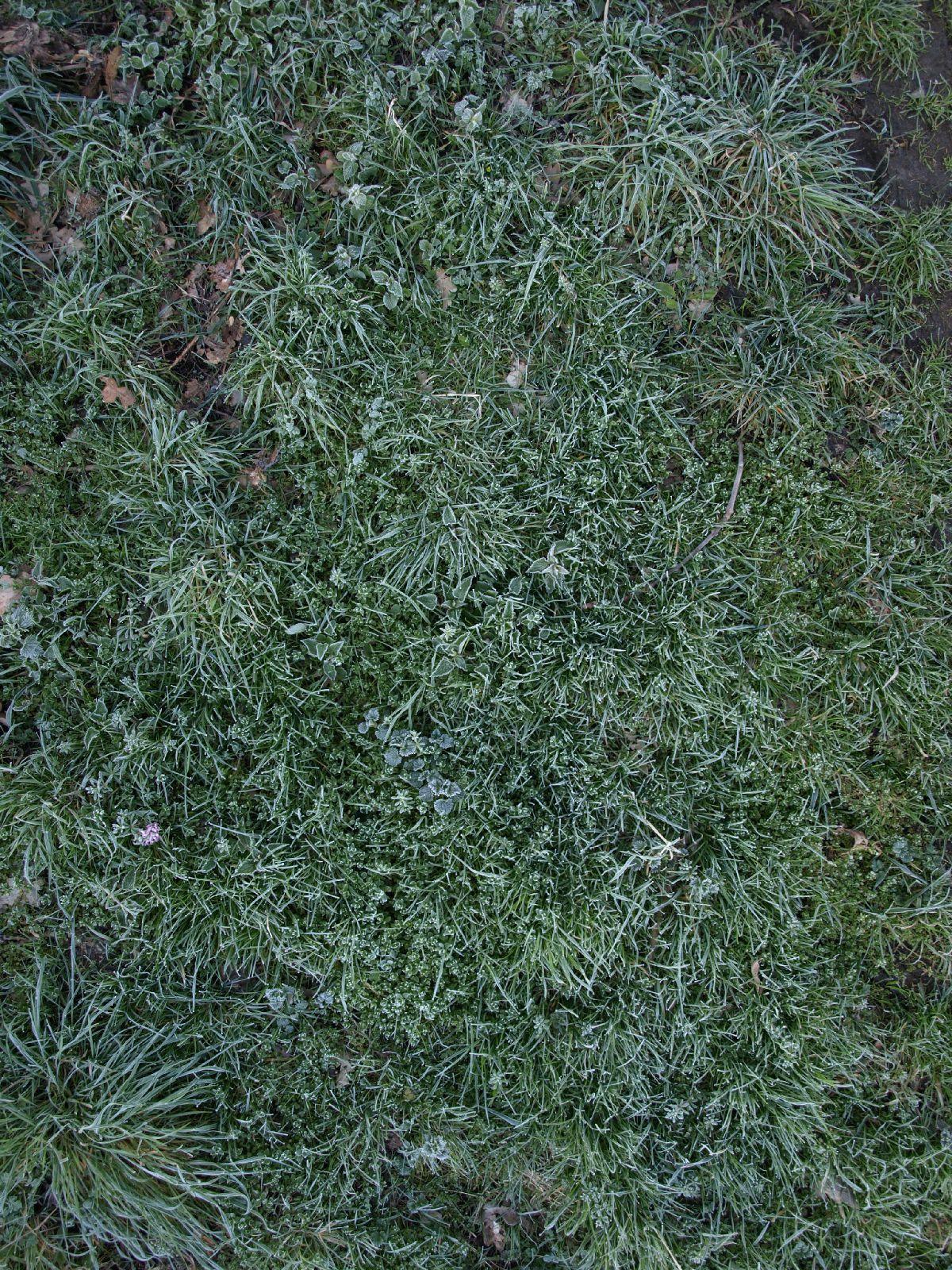 Boden-Gras-Moos-Blumen_Textur_A_P4070133