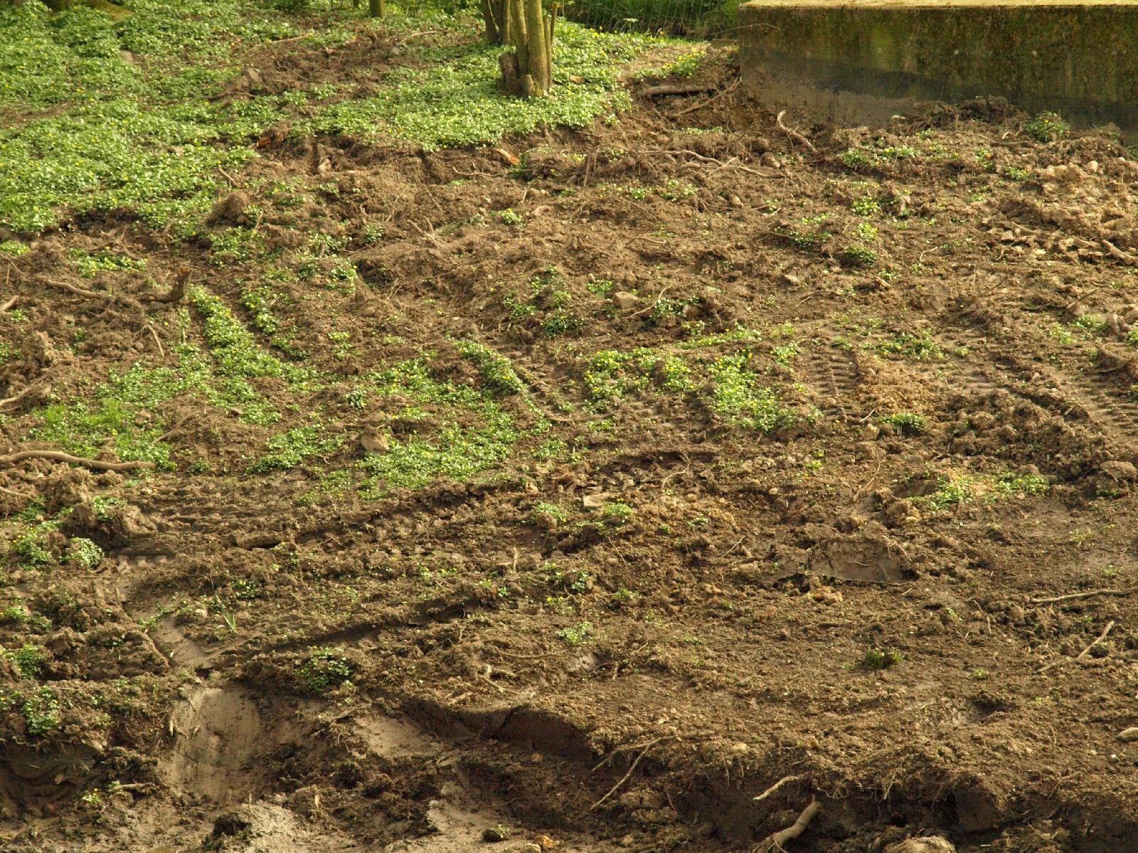 Boden-Gras-Moos-Blumen_Textur_A_P4091800