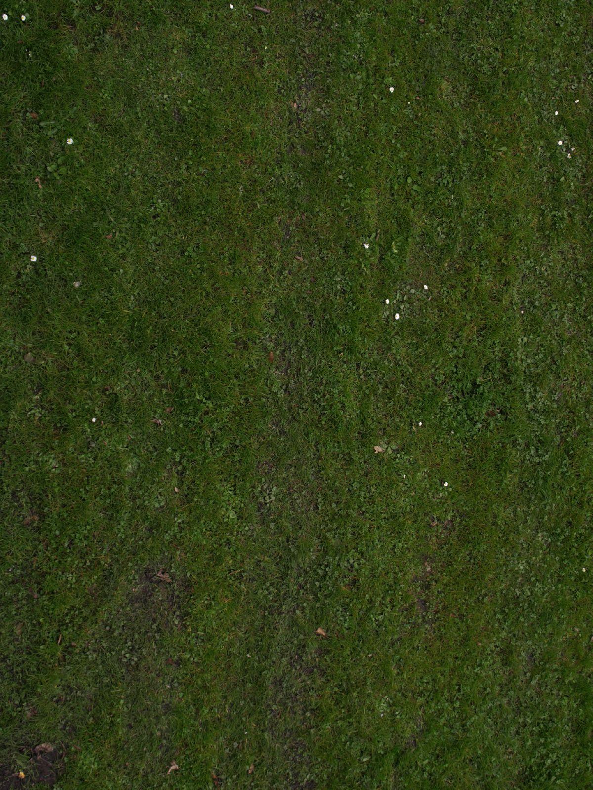Boden-Gras-Moos-Blumen_Textur_A_P4120812