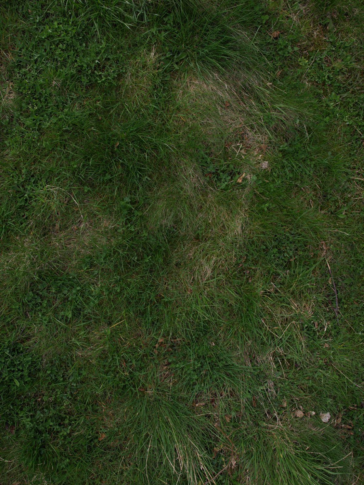 Boden-Gras-Moos-Blumen_Textur_A_P4120924