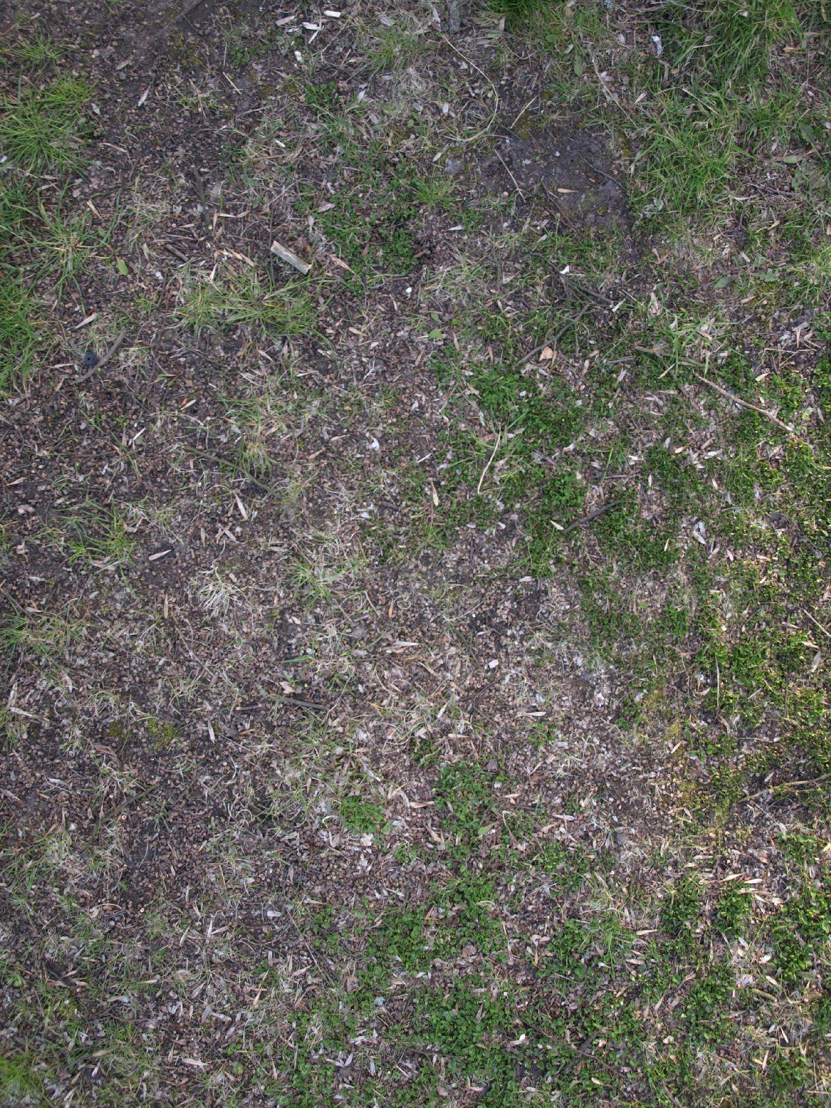 Boden-Gras-Moos-Blumen_Textur_A_P4120947