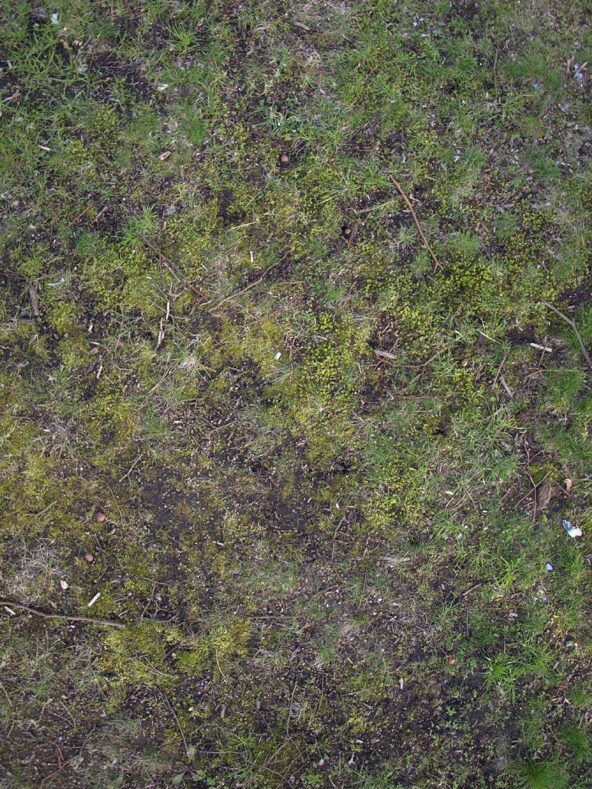 Boden-Gras-Moos-Blumen_Textur_A_P4120948