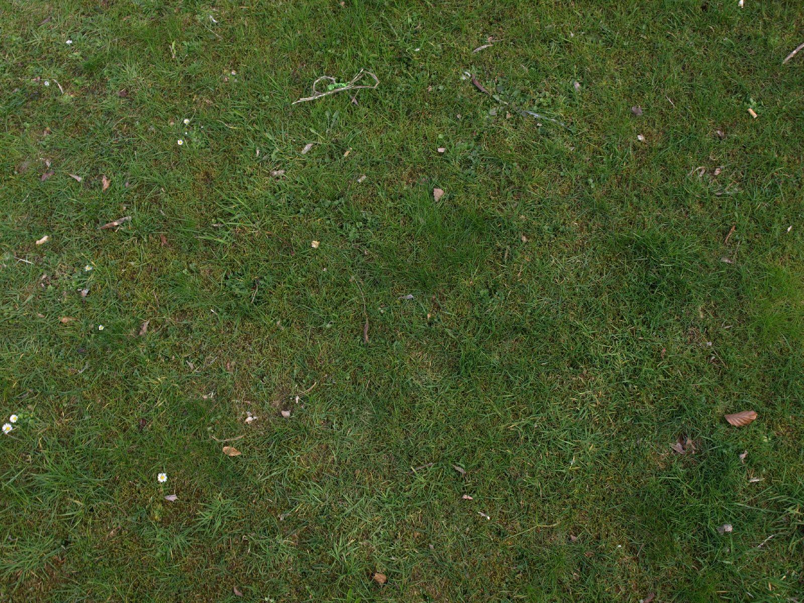 Boden-Gras-Moos-Blumen_Textur_A_P4120955