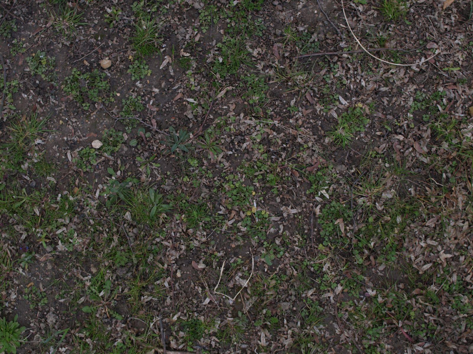 Boden-Gras-Moos-Blumen_Textur_A_P4120970