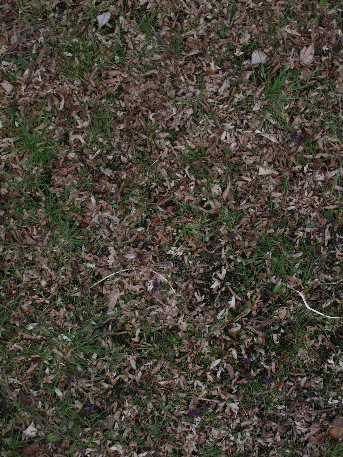 Boden-Gras-Moos-Blumen_Textur_A_P4120971