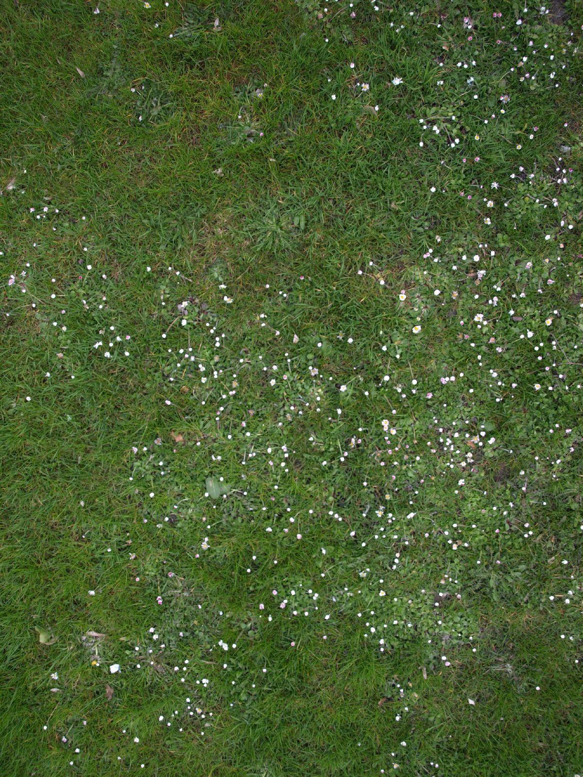 Boden-Gras-Moos-Blumen_Textur_A_P4120974