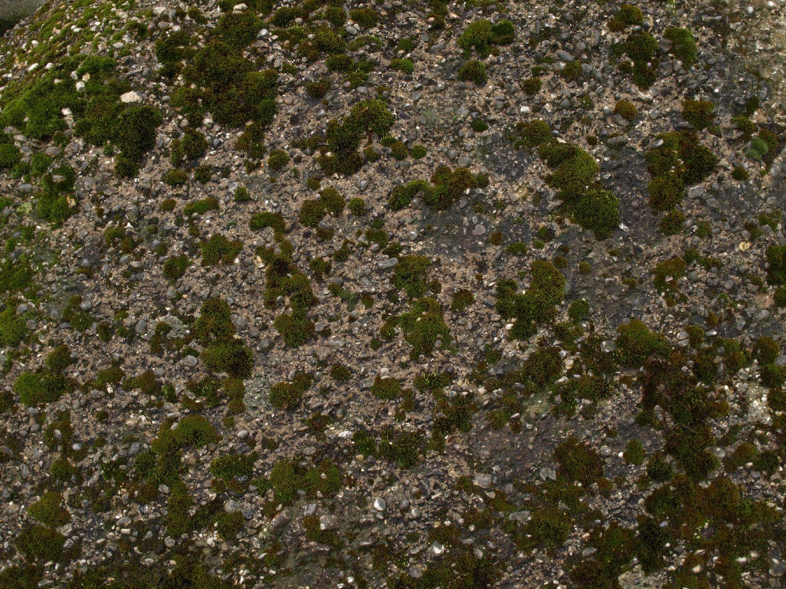 Boden-Gras-Moos-Blumen_Textur_A_P4131174