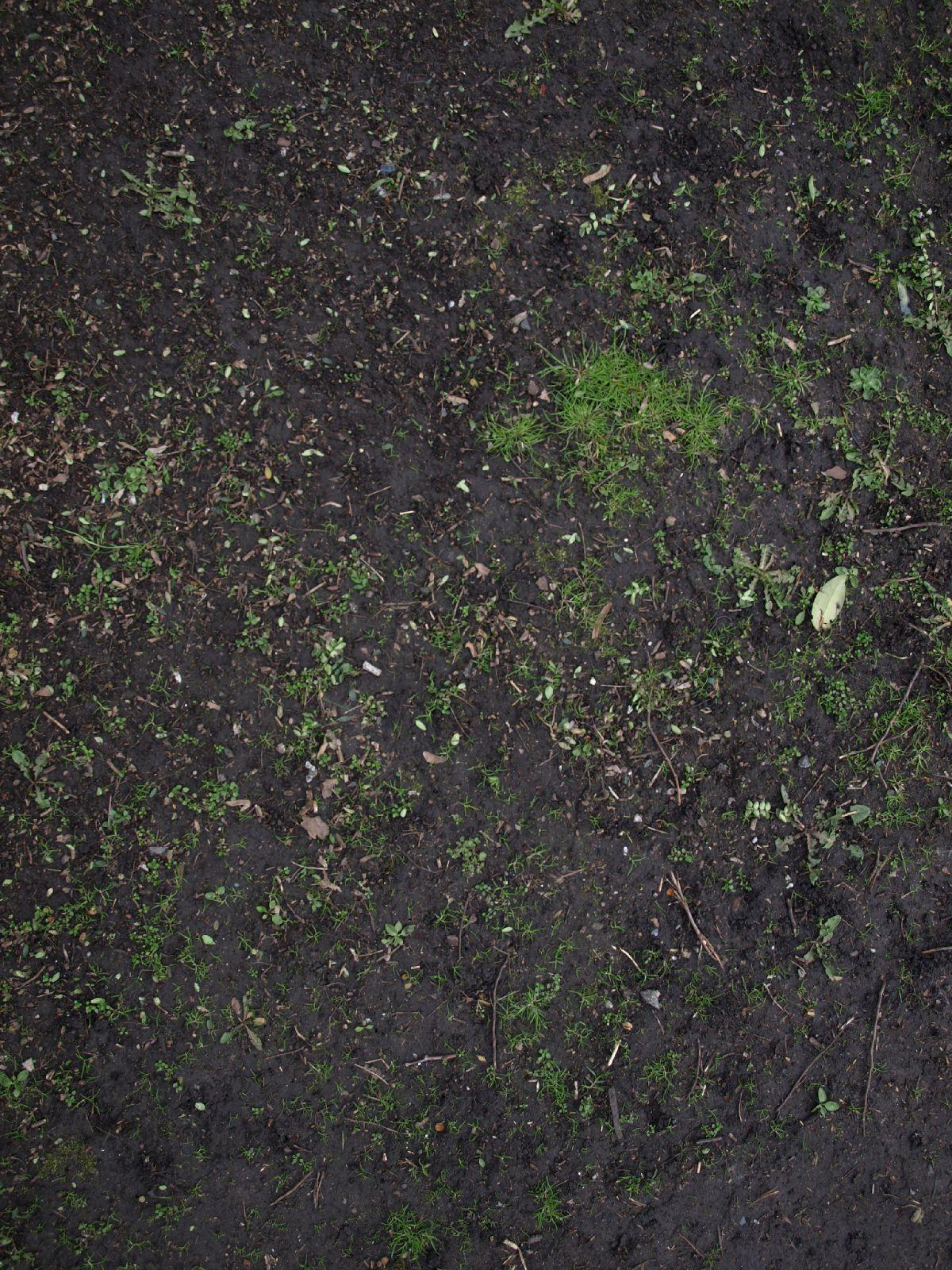 Boden-Gras-Moos-Blumen_Textur_A_P4131182