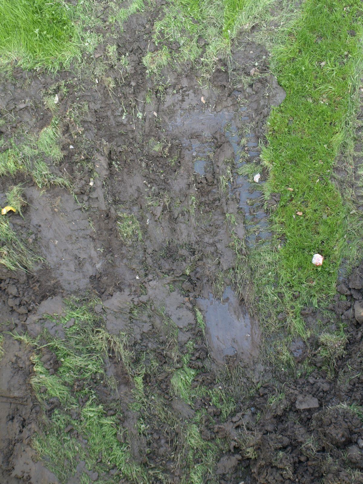 Boden-Gras-Moos-Blumen_Textur_A_P4171290