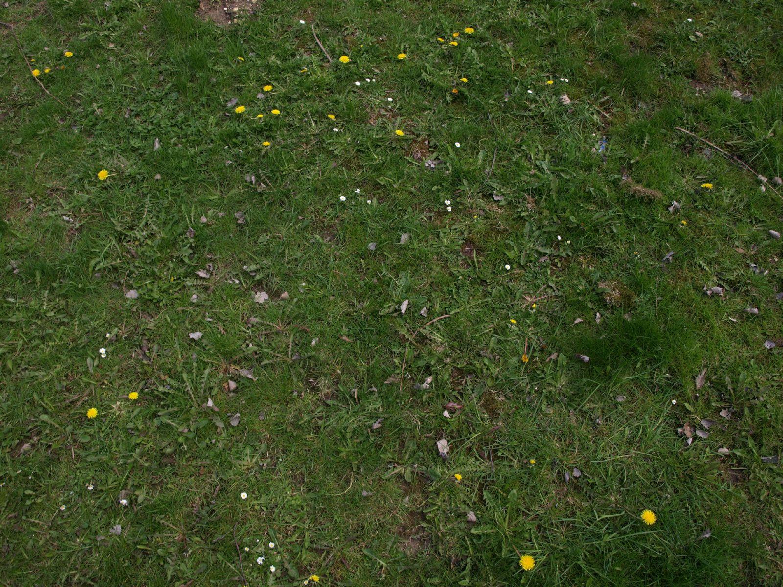Boden-Gras-Moos-Blumen_Textur_A_P4171319