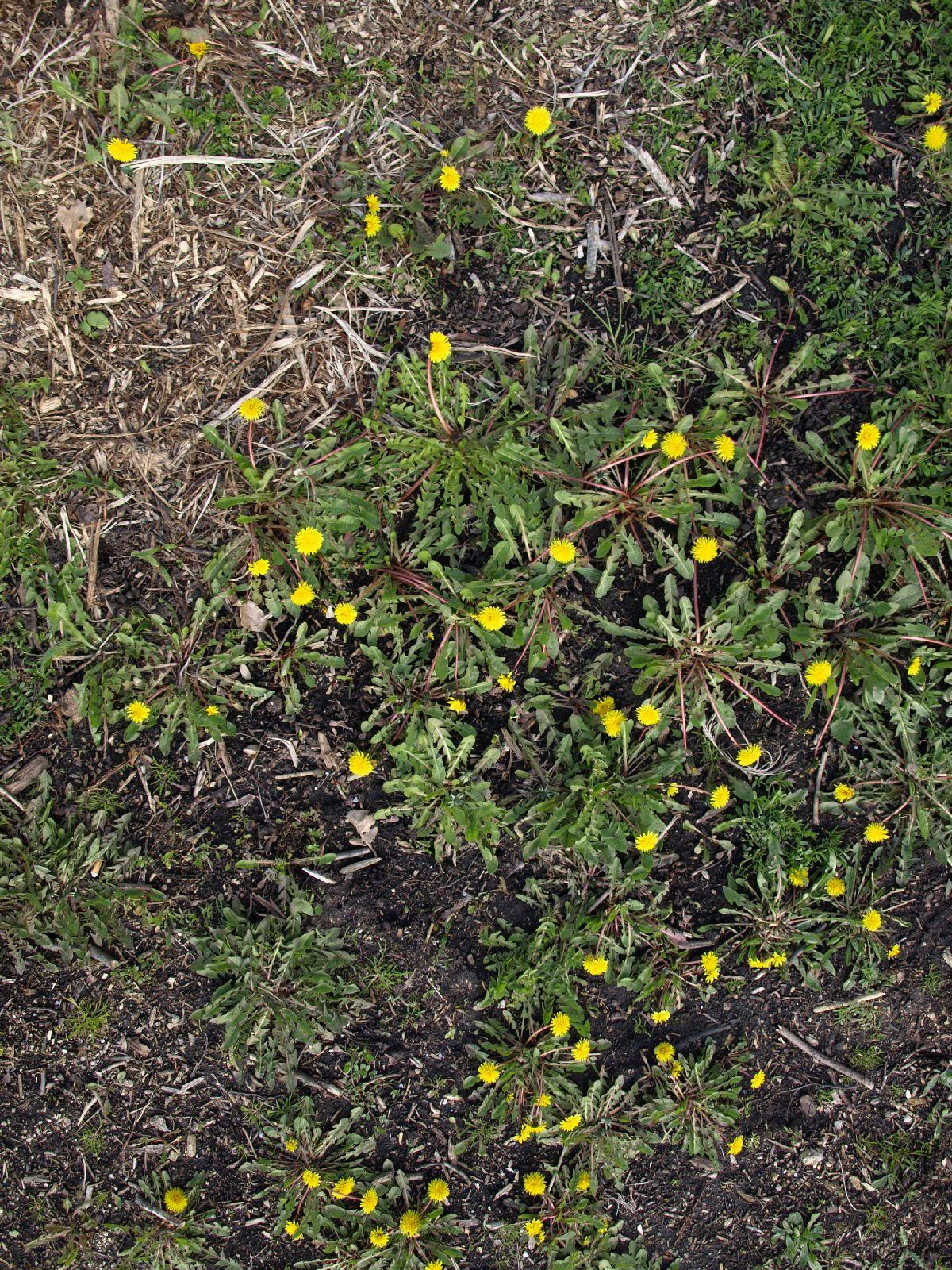 Boden-Gras-Moos-Blumen_Textur_A_P4171324