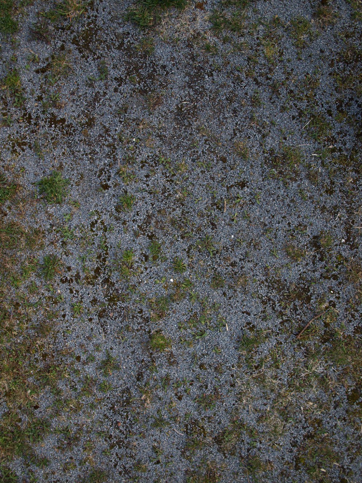 Boden-Gras-Moos-Blumen_Textur_A_P4201600