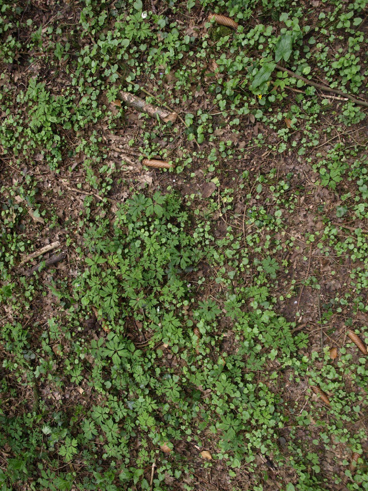 Boden-Gras-Moos-Blumen_Textur_A_P4231719