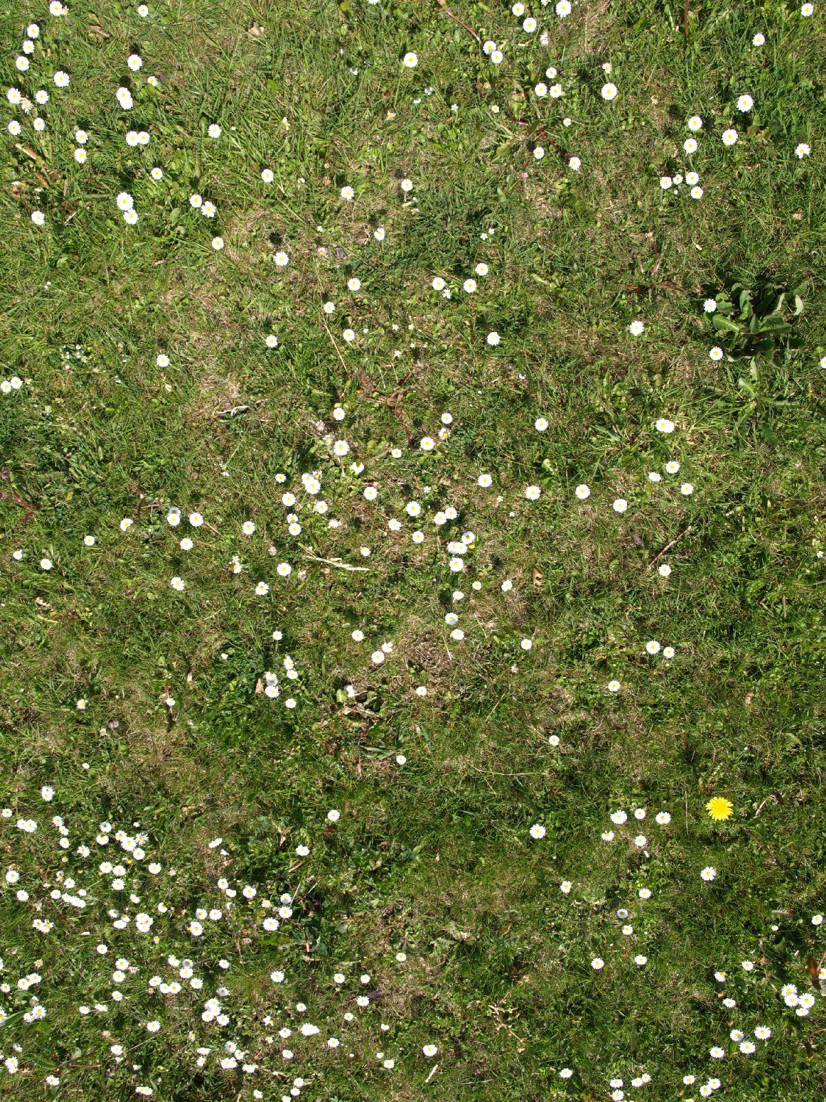 Boden-Gras-Moos-Blumen_Textur_A_P5042451