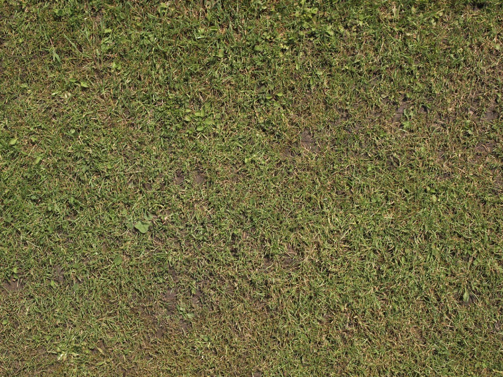 Boden-Gras-Moos-Blumen_Textur_A_P5103377
