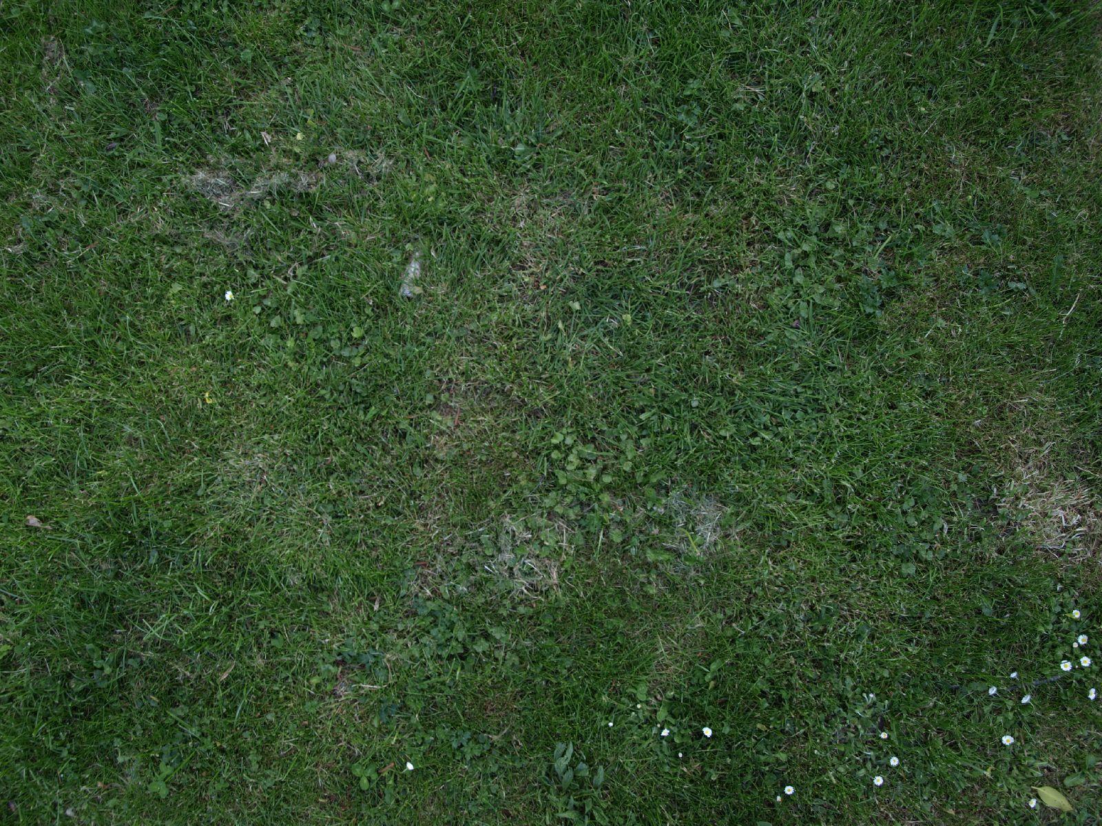 Boden-Gras-Moos-Blumen_Textur_A_P5122666