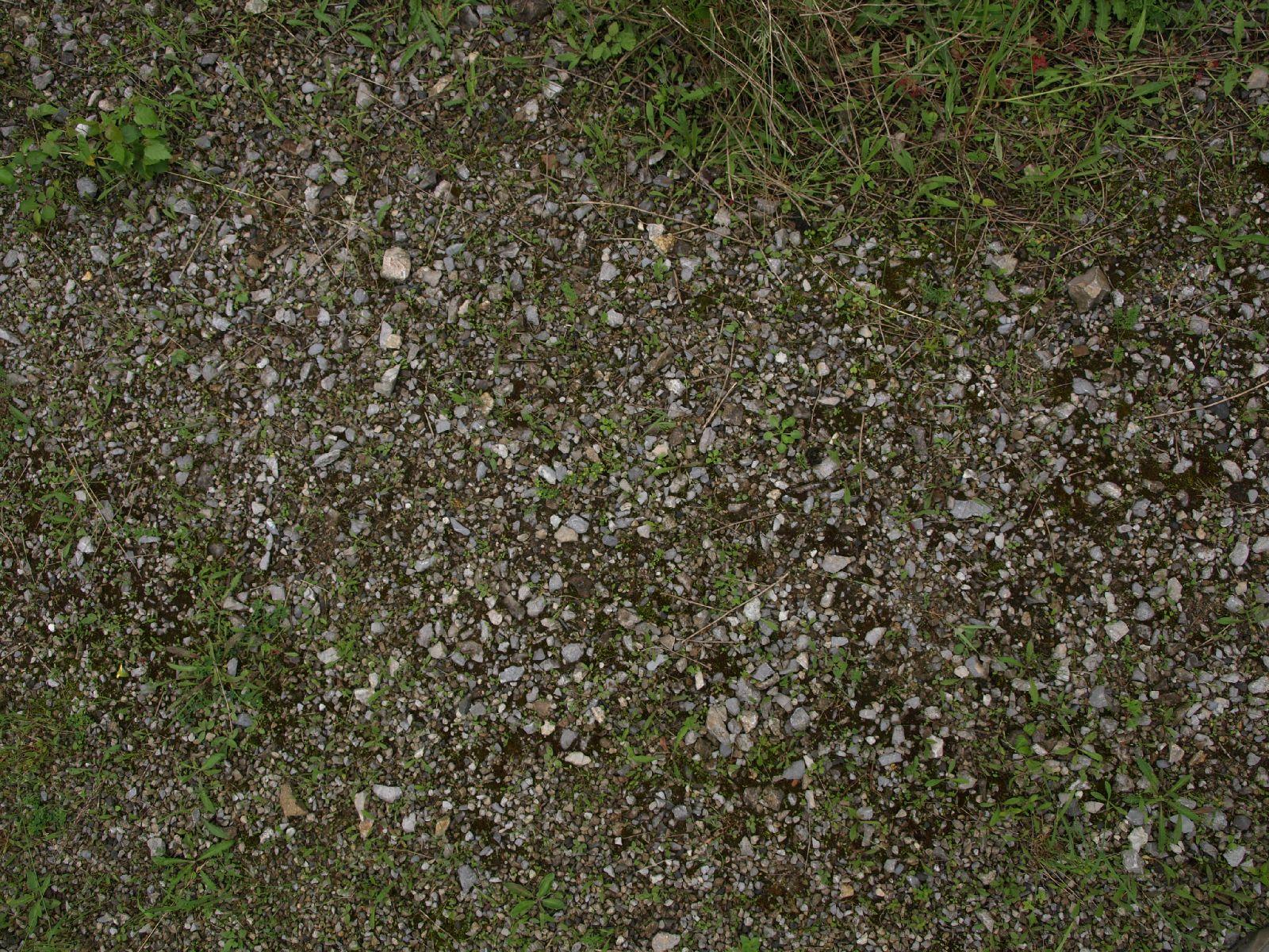 Boden-Gras-Moos-Blumen_Textur_A_P6083296