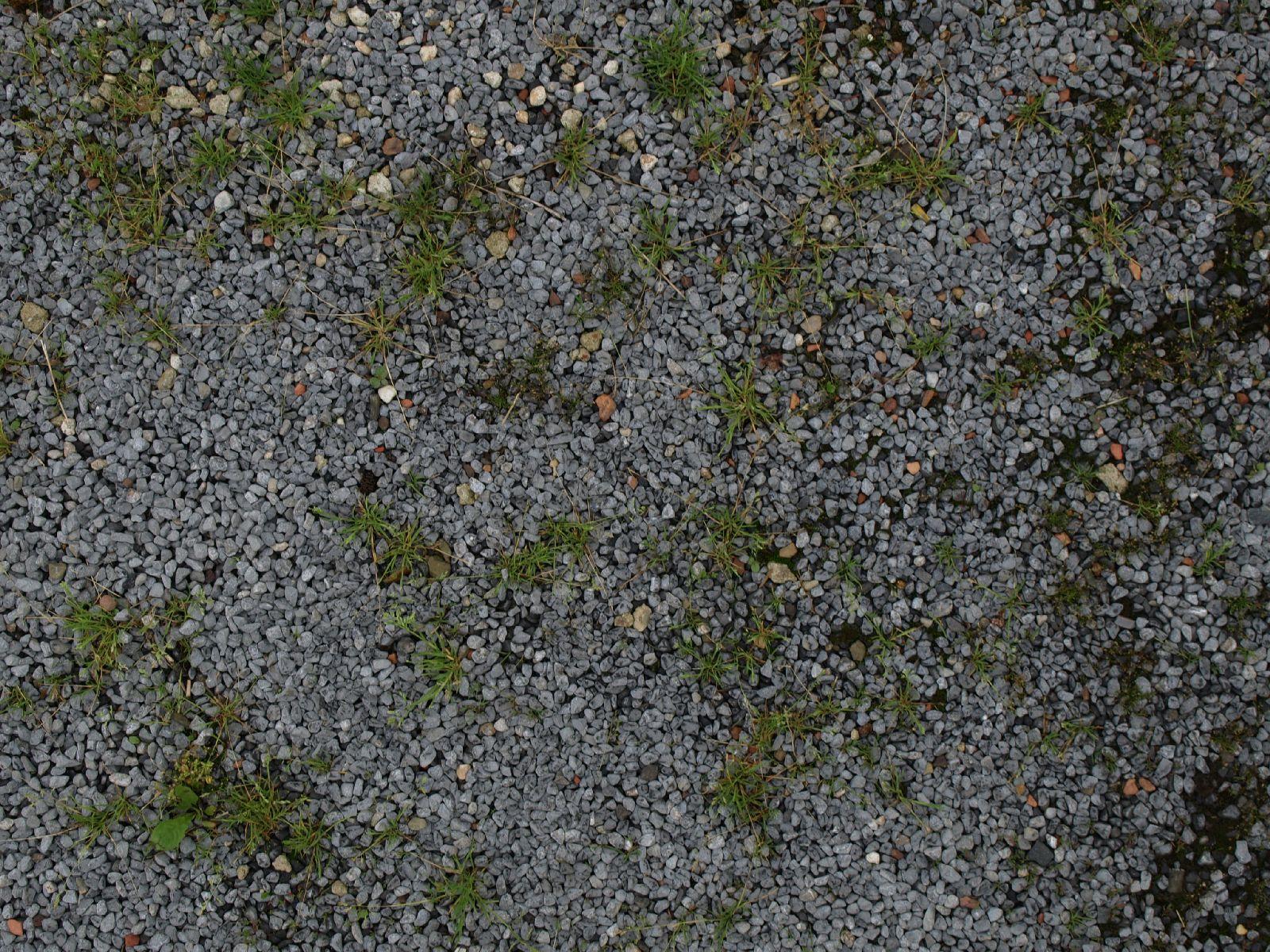 Boden-Gras-Moos-Blumen_Textur_A_P6083336