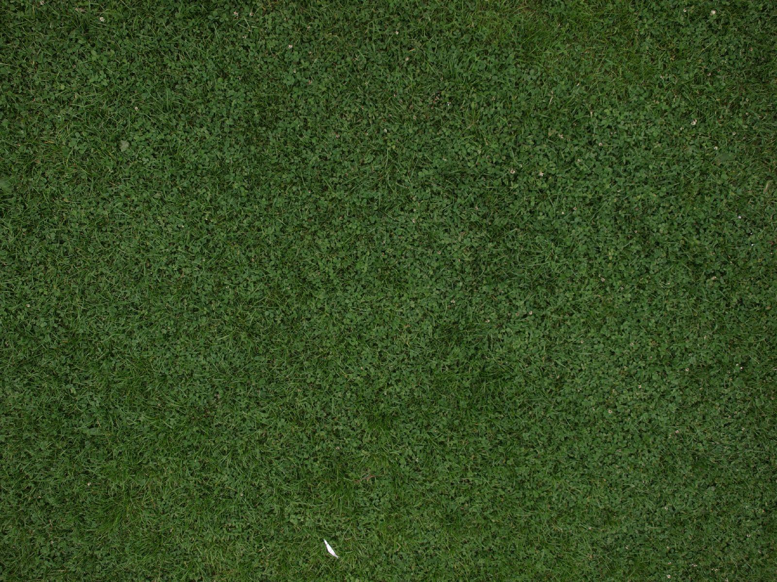 Boden-Gras-Moos-Blumen_Textur_A_P6087013