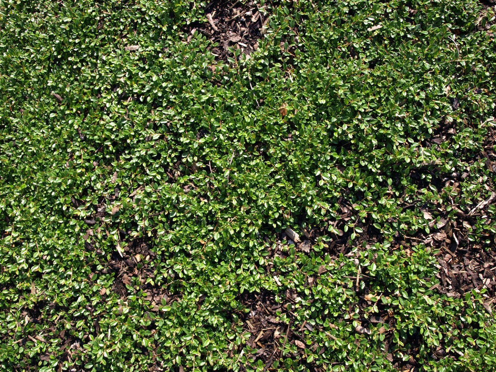 Boden-Gras-Moos-Blumen_Textur_A_P6143388