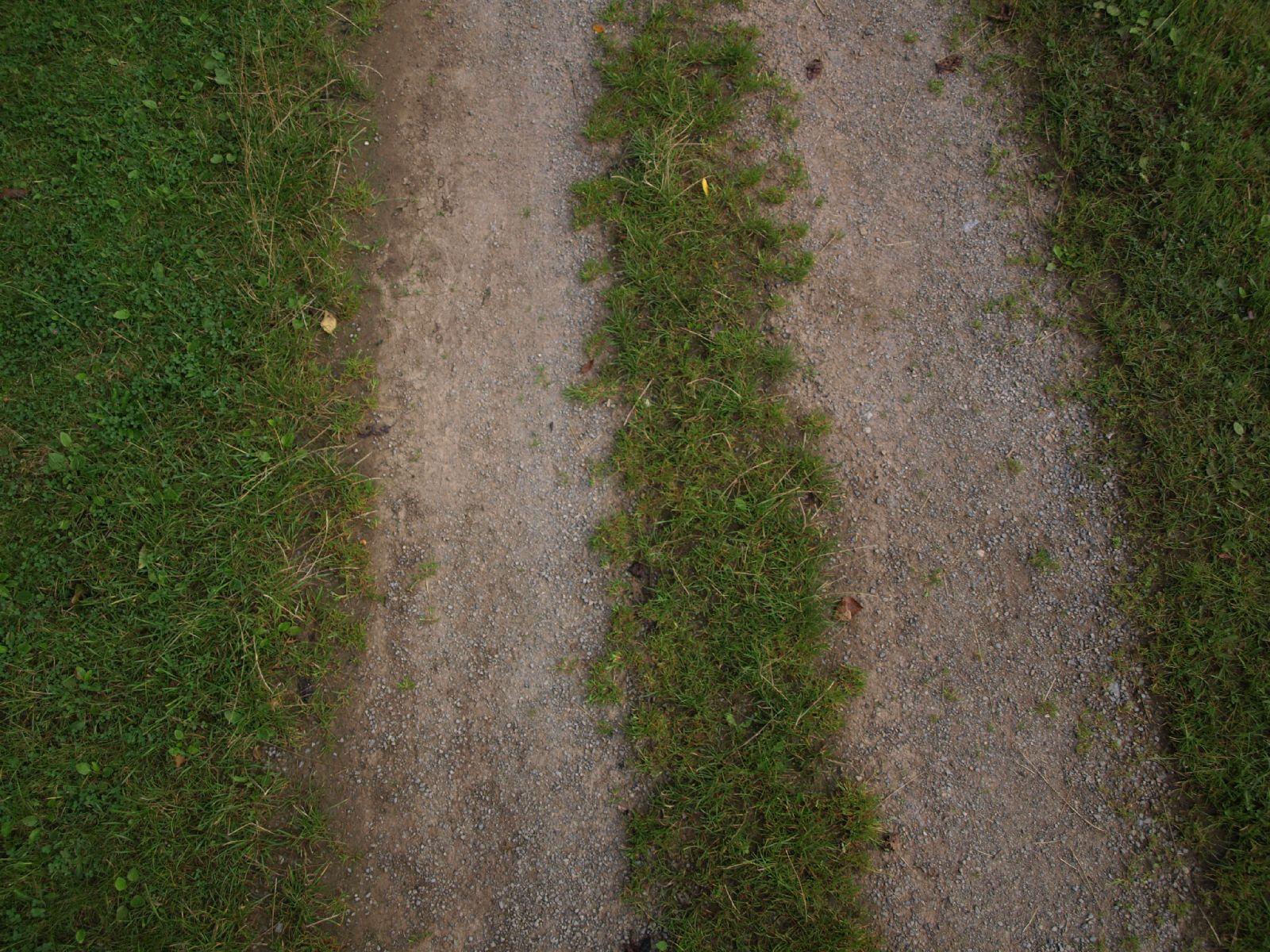 Boden-Gras-Moos-Blumen_Textur_A_P8024118