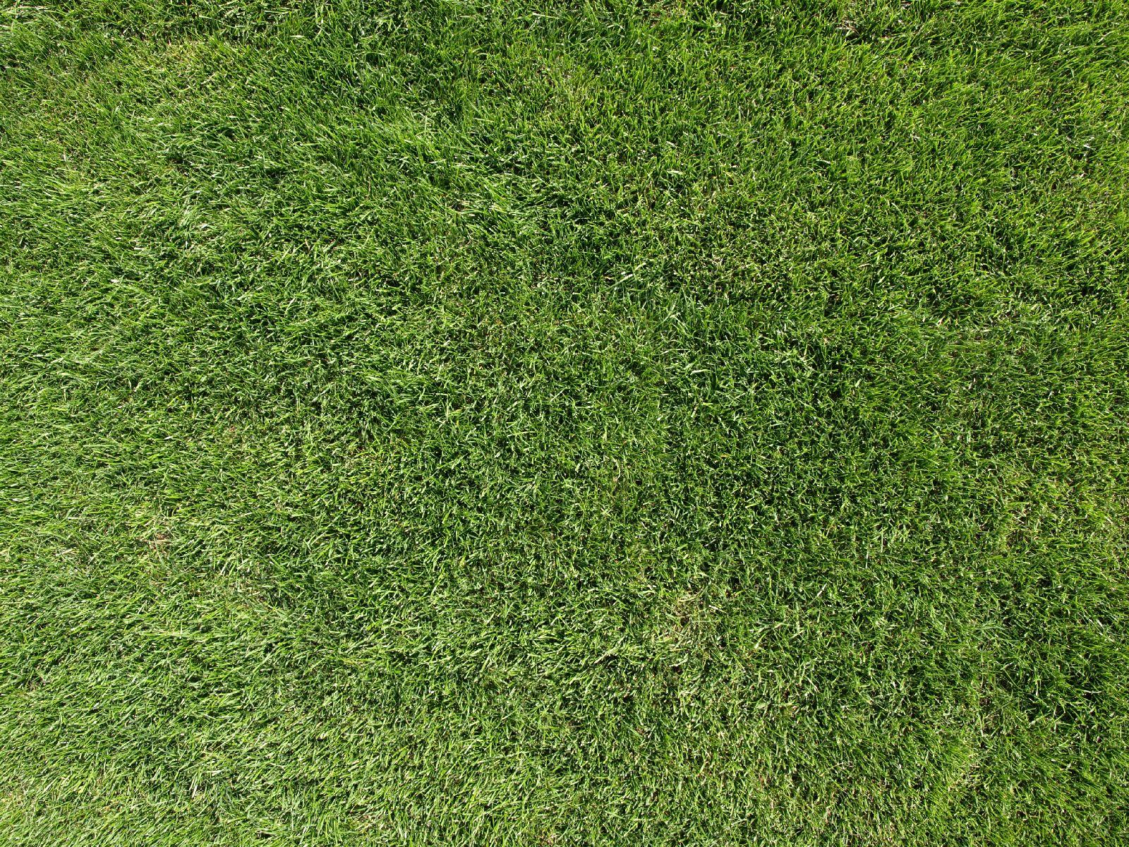 Boden-Gras-Moos-Blumen_Textur_A_P8314707