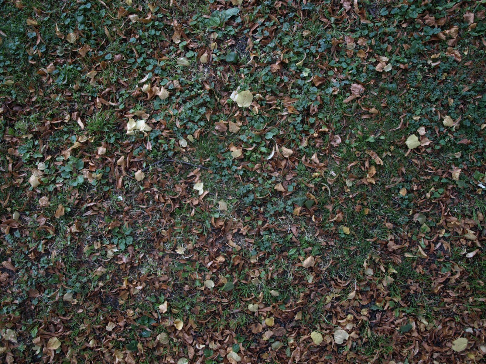 Boden-Gras-Moos-Blumen_Textur_A_P9074781