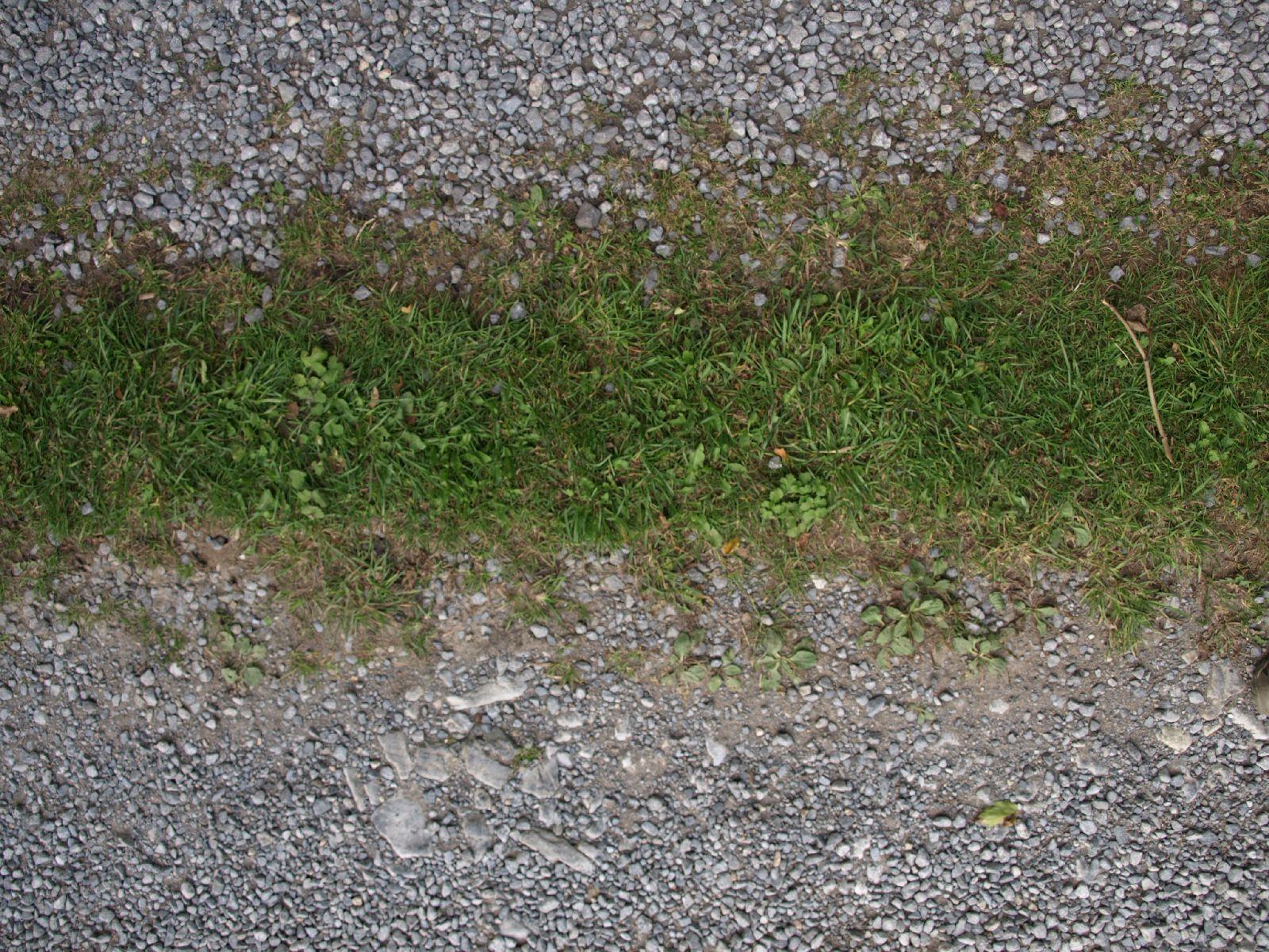 Boden-Gras-Moos-Blumen_Textur_A_P9195073