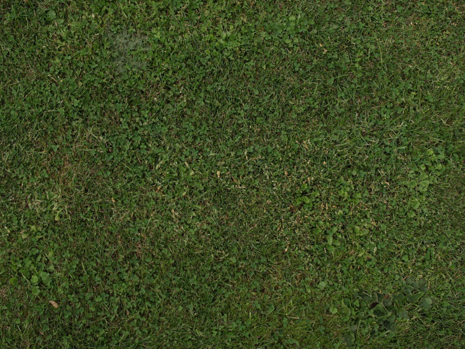 Boden-Gras-Moos-Blumen_Textur_A_P9195171