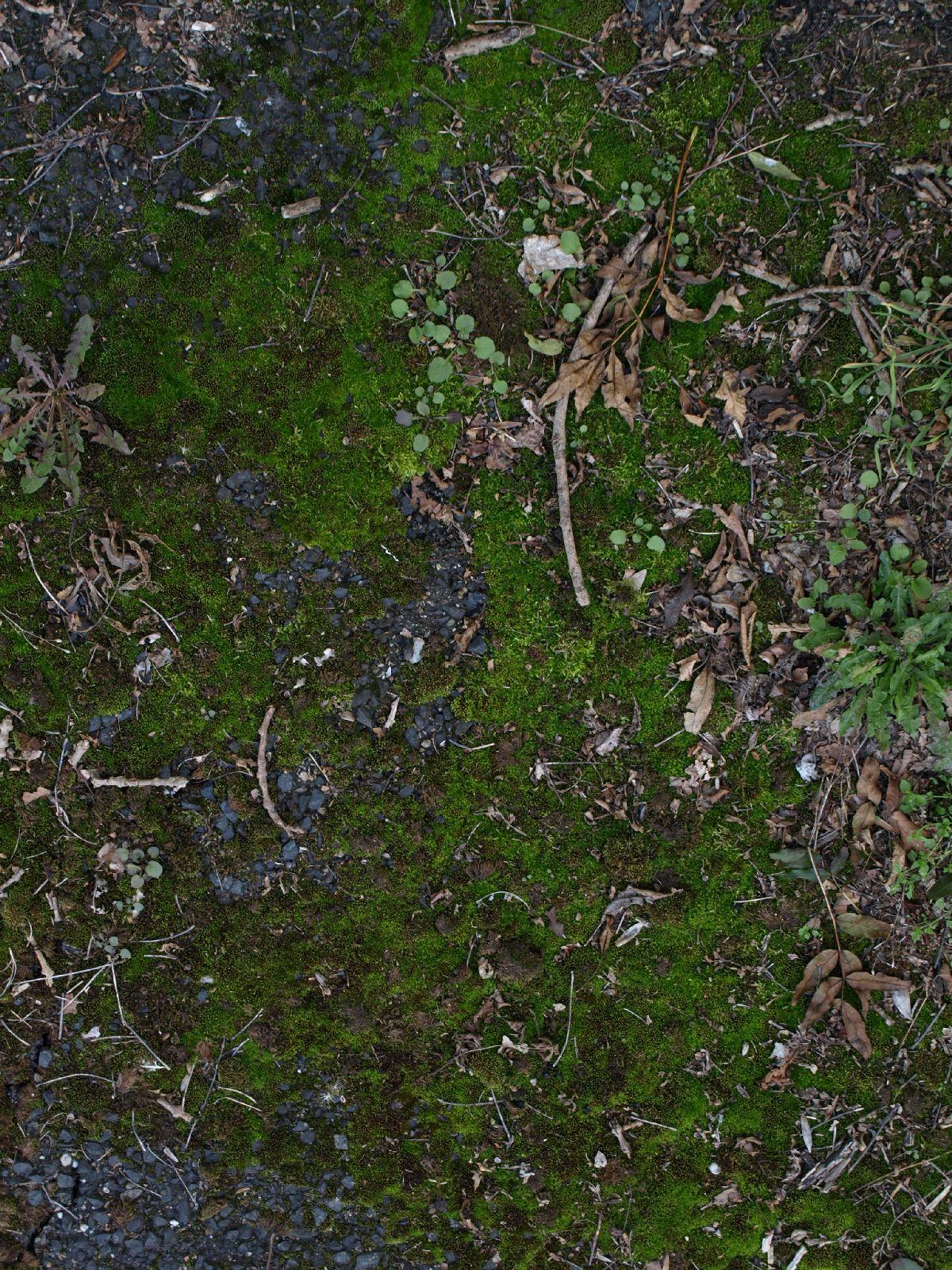 Boden-Gras-Moos-Blumen_Textur_A_P9285596