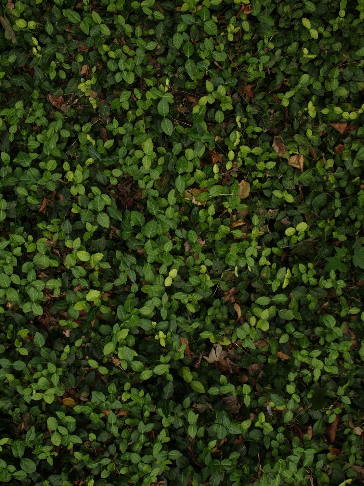 Boden-Gras-Moos-Blumen_Textur_A_PA039930