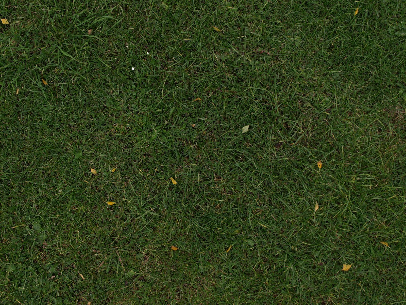 Boden-Gras-Moos-Blumen_Textur_A_PA045711