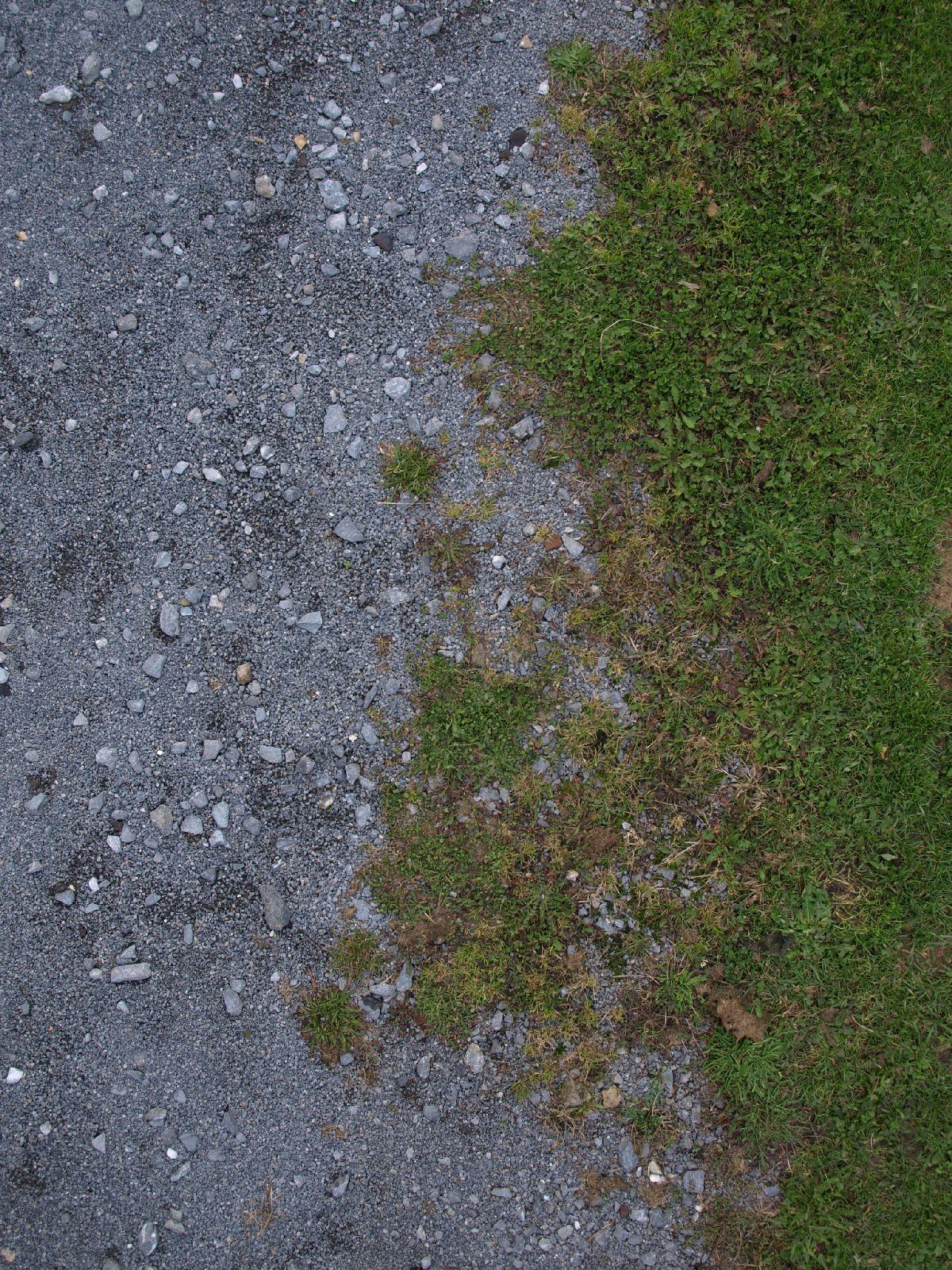 Boden-Gras-Moos-Blumen_Textur_A_PA045779